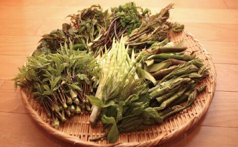 春山の山菜まつり